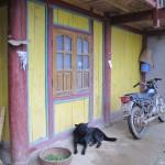 Dog guarding the moto